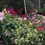 Zdjęcie Mendocino Coast Botanical Gardens