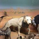 Natural History Museumの写真