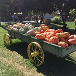 Φωτογραφία: Bishop's Pumpkin Farm