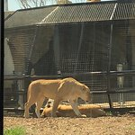 Φωτογραφία: Monarto Zoo