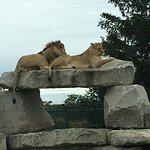 Foto de African Lion Safari