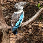 Port Moresby Nature Park照片