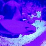Foto di Gardaland SEA LIFE Aquarium