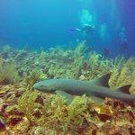 Foto de Black Durgon Dives
