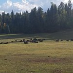 Kaibab National Forest Picture