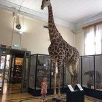 Fotografie: Museo Civico di Zoologia