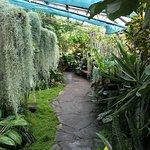 Inverness Botanic Gardens (Tropical Greenhouse)