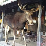 The Moose that captured our attention