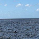 Everglades National Park Boat Tours Image