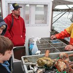 Lobster Boat Tour w/ Captain Clive Farrinの写真