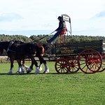Foto de Hay Farm Heavy Horse Centre