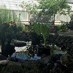Фотография Buffalo and Erie County Botanical Gardens
