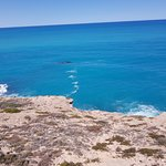 Whales off Head of the Bight