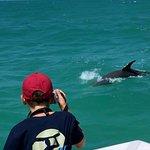 Dolphin Safari Photo
