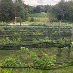 Valokuva: LaBelle Winery