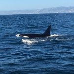 An amazing Orca encounter!