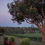 Beautiful vineyard views