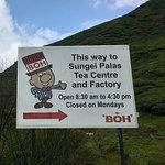 ภาพถ่ายของ Boh Tea Plantation