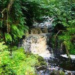 Фотография Glenarm forest
