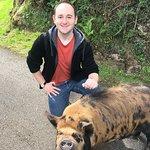 Pig Walking!
