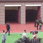 沙田馬場照片
