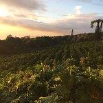 Coffee Farm at Sunset