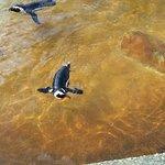 Natureland Seal Sanctuary-bild
