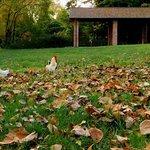 صورة فوتوغرافية لـ Parco Comunale 3 Laghi