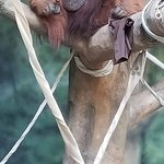 Bilde fra Fort Wayne Children's Zoo