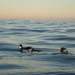 Photo of Kaskazi Kayaks & Adventures