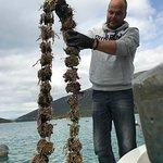 Zdjęcie Dubrovnik Wine Tours