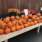 Hundreds of pumpkins