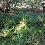 Parco Regionale Migliarino San Rossore Massaciuccoli照片