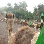 Photo of Camello Center
