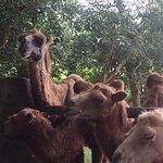 Billede af Hainan Tropical Wildlife Park and Botanical Garden
