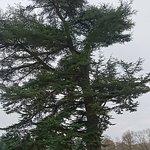 Foto de Parc de Richelieu