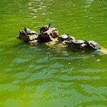 صورة فوتوغرافية لـ Marechal Carmona Park