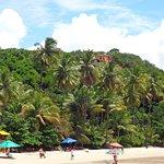 Vista dos coqueirais da praia