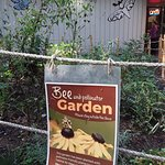 Bild från Lynn Canyon Ecology Centre