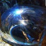 ภาพถ่ายของ Loveland Living Planet Aquarium
