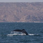 Cola de una hemosa ballena
