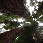 The magnificent Redwoods are a short drive from the hotel