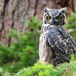 A walk in the woodlands is full of interesting discoveries including this Great Horned Owl