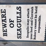 Beware of seagulls