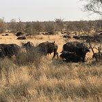 ภาพถ่ายของ Wild Wings Safaris