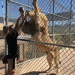 Photo of Lion Habitat Ranch