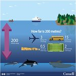 Canada's Marine Mammal Regulation Explained