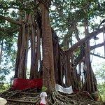 4x4 :arbre sacre