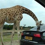 Beekse Bergen Safari Park의 사진