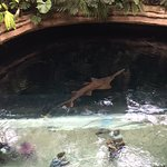 Cenote with sharks. There is glass floor/ceiling for observation below.